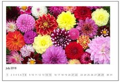 List of beautiful July 2018 wall calendar for Home, Office, School, and College. Write down or mark important dates using Wall Calendar July Public Holidays, Calendar 2018, Calendar Printable, Important Dates, Beautiful Wall, Floral, Free, Flowers, Flower