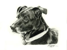 Black Lab Hand Sketched Pet Portrait done in graphite pencil by artist Genevieve Schlueter. All commissions welcome at http://www.gensart.net