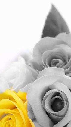 Wallpaper rose