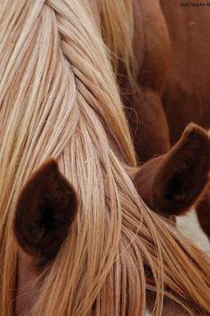 Love this horse's mane!