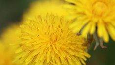 Natural home remedies: Warts Organic Gardening, Gardening Tips, Kill Weeds Naturally, What Are Weeds, Organic Lawn Care, Weed Killer Homemade, Household Pests, Lawn Care Tips, Be Natural