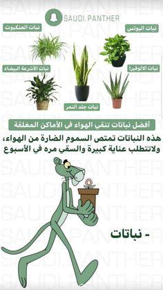 House Plants Decor, Plant Decor, Planting Succulents, Planting Flowers, Flowers Last Longer, Pinterest Room Decor, Home Vegetable Garden, Garden Terrarium, Backyard Garden Design
