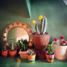 We love @denisaungureanu's indoor garden! All those eclectic planters make us smile--especially that wooden one!  also the wall color is on point  Thanks for sharing in the #jungalowstyle feed!!  by thejungalow