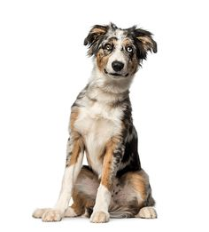 See only the cutest & most adorable pictures of border collie puppy dogs right here . More puppy pics are added almost daily for your enjoyment . Cute Puppies, Dogs And Puppies, Doggies, Puppy Pictures, Cute Pictures, Border Collie Pictures, Dog Stock Photo, Border Collie Puppies, Puppy Breeds