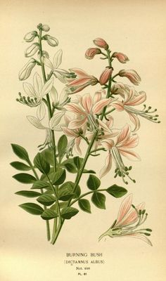 1896-97 - v. 1 - Favourite flowers of garden and greenhouse - by Edward Step