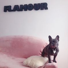 """Flamour Boutique on Instagram: """"#flamour boy 🐶"""" French Bulldog, Boutique, Boys, Pretty, Animals, Instagram, Baby Boys, Animales, Animaux"""