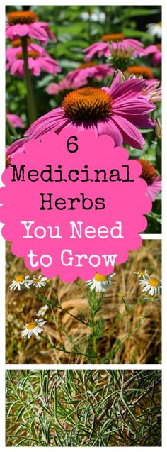 6 Medicinal Herbs to Grow in Your Backyard & Family Growing Pains My six favorite medicinal herbs you can grow in your herb garden. They're perfect for natural, home remedies.