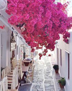 """8,864 свиђања, 49 коментара -  Destination Earth (@destination.earth) у апликацији Instagram: """"Bouganville street ~ Mykonos, Greece Photography by @margarita_karenko"""""""