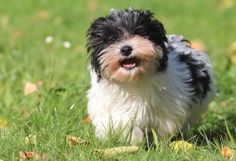 10 Healthiest Dog Breeds | petMD
