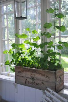 Indoor Garage with Plants Swedish Cottage, Cottage Style, Estilo Country, Vibeke Design, Marquise, Vintage Farmhouse, Plant Decor, Porches, Country Decor