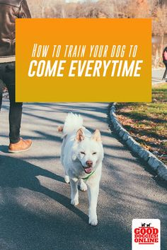 Tired of chasing your dog? How to train your dog to come every time. If your dog doesn't listen or doesn't come when called, check out these dog training tips to get your dog to come when you call. Dog Minding, Leash Training, Potty Training, Basic Dog Training, Aggressive Dog, How To Train Your, New Puppy, Dog Behavior, I Love Dogs