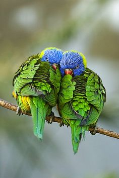 Just looking at pictures of nature – or eating lunch under a tree – can ease mental fatigue and can improve your mood and focus. (Lorikeets) http://www.tesh.com/story/cc/6/id/25669
