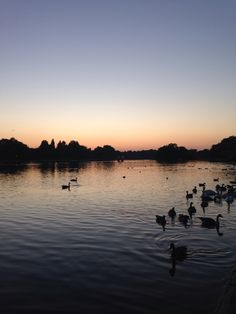 Hyde Park at sunset this week