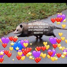 I enjoy making these wholesome possum edits. Love You Meme, Love Memes, Funny Love, Baby Opossum, Kiss Meme, Bf Memes, Couple Memes, Heart Meme, Jokes