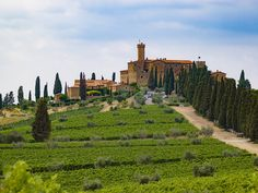 The best wineries to visit in Tuscany