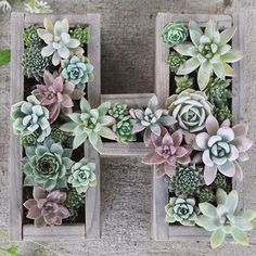 H is for Happy #succulentsunday! we made this letter garden with repurposed pallet wood and a staple gun!