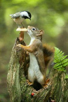 Обед на двоих.