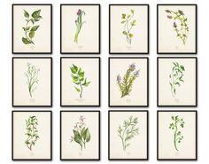 Watercolor Herbs Print Set No.5 - 12 Herb Botanical Prints