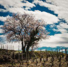 Paysage de printemps à Larnage, village drômois où se situe la carrière de Terre Blanche avec laquelle sont fabriqués les fameux fours à bois Le Panyol.