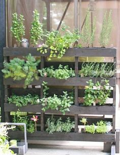 Wood euro pallets furniture for garden and balcony - ideas you can build yourself DIY craft Outdoors decoration ++ Palets para plantas jardin vertical terr Balcony Herb Gardens, Vertical Gardens, Garden Planters, Herbs Garden, Gardening Vegetables, Garden Boxes, Terrace Garden, Garden Flags, Herb Garden Pallet