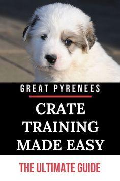 Puppy Training Tips, Crate Training, Training Your Dog, Potty Training, Training Pads, Pyrenees Puppies, Great Pyrenees Puppy, Best Puppies, Best Dogs