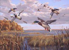 "Waterfowl Paintings | "" -Waterfowl Paintings Waterfowl Paintings by Scot Storm - Waterfowl ..."