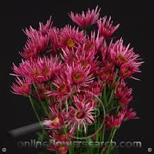 Pompon Annecy Pink
