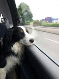 Loving the car journeys.