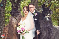 Gorgeous bride, groom & pet llama portrait!! Wedding at Laurelwood Farms, Chattanooga TN. Photography by: https://www.facebook.com/KenneyPhoto