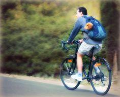 Coast to coast cycling story - A Haiku Deck by Judith Collier Free Presentation Software, Biking With Dog, Haiku, Your Story, Cycling, Coast, Deck, Bicycle, Athens