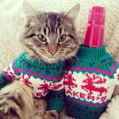 Kitten and Bourbon Wear Matching Sweaters for the Holidays. (My foster kitty made the Fluffington Post! Cat Captions, Matching Sweaters, Bad Cats, Cat Sweaters, Thirsty Thursday, Holiday Sweater, Funny Cats, Makers Mark