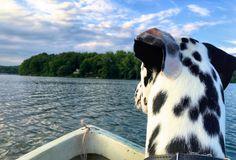 #dalmatian #dam #boat | by Heli.Voz