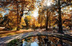 DSC05419innsbruck_hofgarten Innsbruck, All Pictures, Change, Fall, Pictures, Getting Older, Courtyard Gardens, Autumn, Nature