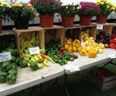 Saratoga Springs Farmers Market