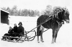 a family - perhe - Finnish horse Old Photographs, Old Photos, Majestic Horse, Family Genealogy, Winter Art, Marimekko, Wwii, Countryside, Skiing