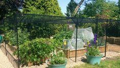 6m x 6m Steel Fruit Cage, Mrs Roberts - Buckinghamshire