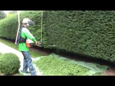 hedge trimming an 80 yard - YouTube
