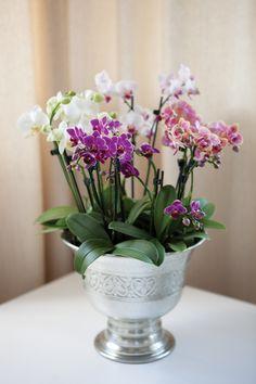 Mini orkideer i champagnekjøler: http://www.mestergronn.no/blogg/orkide-forforende-og-vakker/