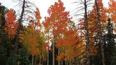 Amazing fall colors 2014