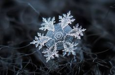 """""""Amazing macro-photography of individual snowflakes Pictures]"""" by """"Photographer Alexey Kljatov [who] takes incredible close-up photos of snowflakes in his backyard in Moscow."""" -- The photos at the click-through are simply astonishing! Fotografia Macro, Macro Fotografie, Close Up Photos, Cool Photos, Amazing Photos, Beautiful Pictures, Unbelievable Pictures, Snowflake Photography, Snowflake Images"""