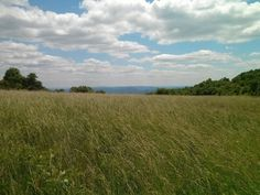 ✓ Calf Mountain Trail, Shenandoah National Park (2.1 Miles, elevation gain: 443 ft - meadows)