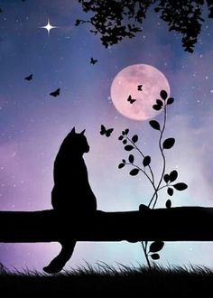 Cats and Full Moon Thinking Of You Card with your own Handwriting. Stephanie Laird Photography for Signed – Card No. 7023 – Hair and Beauty Cat Wallpaper, Cute Wallpaper Backgrounds, Shadow Painting, Black Cat Painting, Silhouette Painting, Silhouette Cameo, Moon Art, Moon Moon, Cat Art
