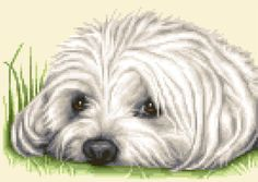 MALTESE-dog-complete-counted-cross-stitch-sewing-kit-STUNNING