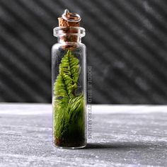 "315 mentions J'aime, 13 commentaires - Doodle Bird Terrariums (@dbterrariums) sur Instagram : ""Making more of these little terrarium pendants. I use two types of moss - a grassy looking one and…"""