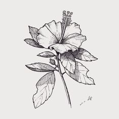 Photo And Video, Park, Tattoos, Illustration, Flowers, Tattoo Ideas, Instagram, Shirt, Tatuajes