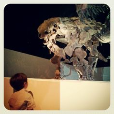 Instagram / mommabun: #dinosaurs