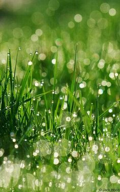 Dew on the morning grass...