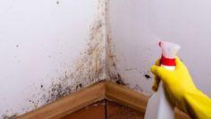 Toto je důvod, proč mám každý rok bohatou úrodu rajčat, ukázkový trávník a žádné škůdce v zahradě: Nasypte do zahrady tuto přísadu, účinek se projeví hned! – Domaci Tipy Remove Mold From Walls, Get Rid Of Mold, Mildew Stains, Mold And Mildew, Best Mold Remover, Mold Removal, Homemade Cleaning Products, Wall Molding, Deep Cleaning
