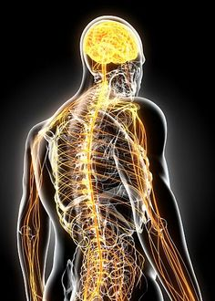 Multiple Sclerosis is an autoimmune disease in which the immune system attacks the central nervous system. It results in damage to nerve fibers