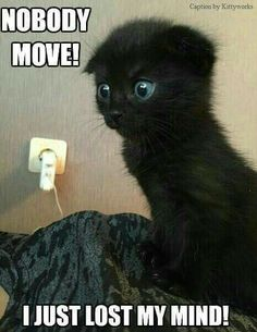 humor art Cats are cute and sometimes unintentionally do stupid funny things, so we have collected some the funniest and most hilarious cat memes and pictures hope you will enjoy em. Cute Little Animals, Cute Funny Animals, Cute Cats, Funny Animal Memes, Funny Cats, Cats Humor, Kittens Cutest, Cats And Kittens, Pretty Cats